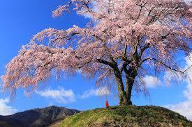4月8日~4月9日春の一泊ツーリングin霧島のご案内