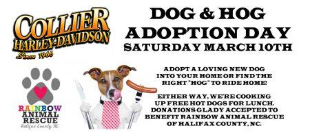 Dog & Hog Adoption Day