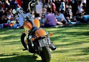 Concerts in the Park Brought to you by Harley-Davidson Cape Town