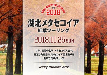 2018.11.25(日)湖北メタセコイア紅葉ツーリング