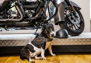 День открытых дверей в Краснодар Harley-Davidson! 27 июля 2019 года