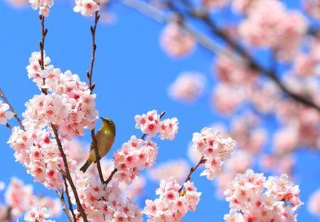 春の写真投稿